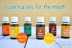 Essential Oils to Use for the Mouth to Purify and Banish Bad Breath Best Picture For DIY for Dogs pe Bad Dog Breath, Bad Breath Remedy, Coconut Oil For Dogs, Coconut Oil For Skin, Young Living Oils, Young Living Essential Oils, Easential Oils, Essential Oils Dogs, Mouthwash