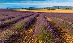 Plateau de Valensole Provence France by EuropeTrotter