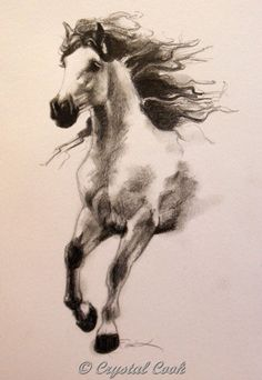 In Flight - Andalusian Horse, painting by artist Crystal Cook Horse Drawings, Animal Drawings, Art Drawings, Abstract Drawings, Horse Artwork, Horse Paintings, Horse Sketch, Drawn Art, Andalusian Horse