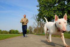 imagem de cachorro - Pesquisa Google