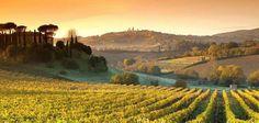 Grote tuin: wijnranken