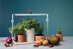 bulbo cynara and quadra LED lights encourage plant growth in homes - designboom | architecture