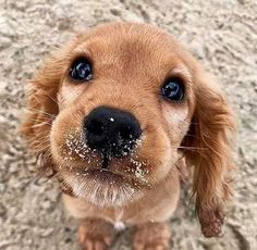 Cute Little Puppies, Cute Dogs And Puppies, Baby Dogs, Doggies, Female Dog Names, Photo Animaliere, What Do You Mean, Tier Fotos, Cute Animal Pictures