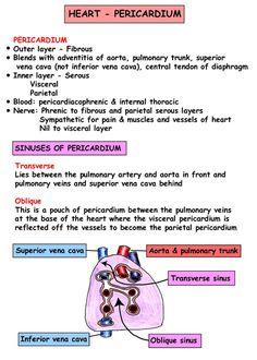 Cardiac - Pericardium
