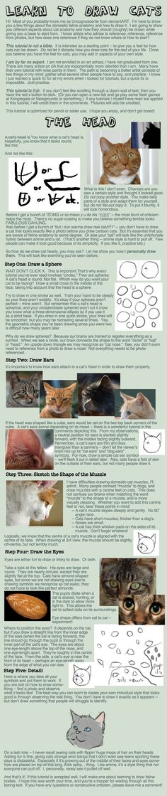 Cat Tutorial: Heads by Uncognoscente.deviantart.com on @DeviantArt