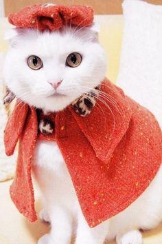 #moda#red#cat#jacket