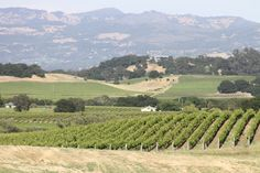 Carneros Resort and Spa -- view of the Napa Valley