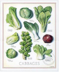 Fruits and Vegetables - John Burgoyne Studio Botanical Drawings, Botanical Illustration, Botanical Prints, Fruit Illustration, Fruit And Veg, Fruits And Vegetables, Veggies, Creative Food Art, Food Charts