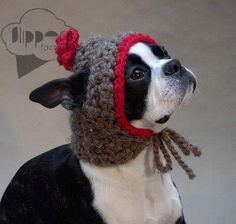 Photograph - Boston Terrier Bean in a Bonnet Pet Christmas Presents, Christmas Goodies, Christmas Stockings, Crochet Animals, Crochet Hats, Knitted Hat, Crochet Ideas, Crochet Sweaters, Crochet Projects