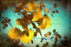 Indian summer... painterly photography Photography For Sale, Fine Art Photography, Indian Summer, Colours, Autumn, Prints, Painting, Art Photography, Fall