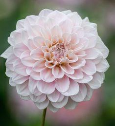 Plant Delivery, Hosta Gardens, Flower Farmer, Fall Arrangements, Home Flowers, Dahlia Flower, Garden Soil, Gardening, Types Of Soil