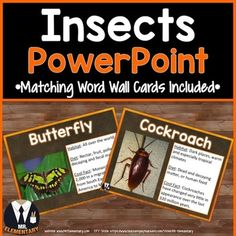 Insects Vocabulary Power Point and Word Wall Posters! This is a FUN, EFFECTIVE way to teach insects vocabulary to your class.