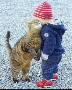 I LOVE ALL CATS.CATS WONDERFULL