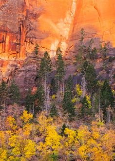 The colors of autumn in Zion National Park, Utah.  Photo: Adam Schallau