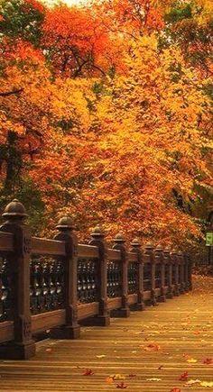 ♥Shades of Autumn