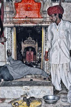 Karni Mata Temple-DESHNOKE, Rajasthan of rats run free the devoted bless their dieties Youtube Banner Design, Youtube Banners, Mata Rani, India Culture, Tanjore Painting, Vintage India, Durga Maa, Photos Tumblr, Amman