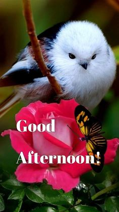 Kinds Of Birds, All Birds, Cute Birds, Pretty Birds, Little Birds, Most Beautiful Birds, Animals Beautiful, Exotic Birds, Colorful Birds