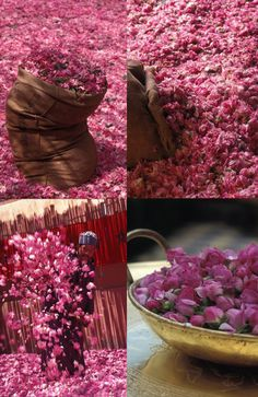 About the first weekend of May every year, Moroccans harvest plenty of roses in Dades valleys (the valley of the roses). Tucked in this valley is Kelaa-des-Mgouna, a town filled with the fragrance of the rose flower it produces and distills. Since it is one of the world's most adored flower, the locals organize the Kelaa-des-Mgouna rose festival to celebrate the harvest of the luring fragrance of the rose flower.