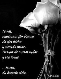 Te vas, centenaria flor blanca de ojos tristes y mirada tenaz. Ternura de manos rudas y voz firme...Te vas, sin haberte visto...