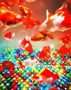 Art Aquarium in Tokyo, Japan