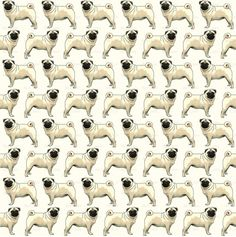 Use this Photo to make a great Pug Pattern Background for your Twitter & Blog Pages.