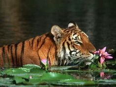 """""""I love to stop and smell the flowers..."""""""