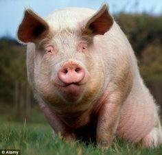 """Piggy says, """"whatttttt!!!!"""""""