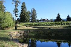Millstone Estate Winery is a family-run, vineyard nestled in the Millstone River Valley Focuses on Pinot Noir, Pinot Gris, Ortega and Gewürztraminer. The Wine Shop, Pinot Gris, Cabernet Sauvignon, Vancouver Island, Wine Country, Farm Life, Wine Tasting, Acre, Vineyard