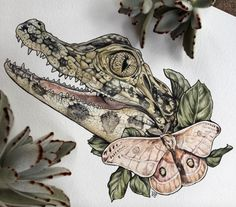 Caiman + Gum Moth Stay tuned for prints and stickers 🙌🏻 📸 . Tattoo Drawings, Cool Drawings, I Tattoo, Design Tattoo, Tattoo Designs, Krokodil Tattoo, Arte Naturalista, Petit Tattoo, Dibujos Tattoo