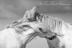 Spectacular Images of Horses by Tina Thuell By: Lyndsey Meyer