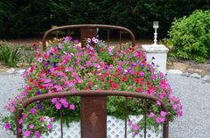 Christy's plant-lover's garden   Pink, red and blue Petunias n full bloom, complete with fluffy pillow!