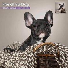 French-Bulldog-2016-18-Month-Traditional-Calendar