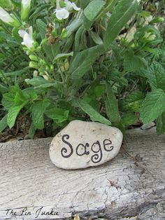 Easy DIY Plant Markers - label a rock with a Sharpie!