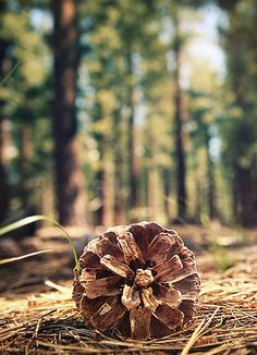 I love the focus on this pinecone, perhaps symboling autumn coning but summer still evident in the trees in the background, the pinecone acting almost as an omen of death. Walk In The Woods, Cabins In The Woods, Image Nature, Gods Creation, Natural World, Pine Cones, The Great Outdoors, Mother Nature, Woodland