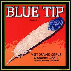 This fruit crate label was used on Blue Tip Oranges, c. 1930s: 'Blue Tip Brand. West Orange Citrus Growers Ass'n. Winter Garden, Florida.' Crate labels were a frequent means of marketing fruit and veg