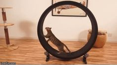 An exercise wheel for cats.   21 Genius Gadgets On Kickstarter Right Now II Lucky needs THIS! MUST HAVE *Lucky is my fat ** cat from the barn I ride at I took him home **Evil also!