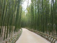 울산태화강십리대숲