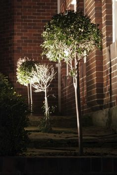 DIY uplighting is a fast, relatively inexpensive way to change your backyard from run of the mill to magical. You can choose among many types of uplighting to illuminate your garden and backyard. Learn more in this article. Landscaping Near Me, Outdoor Landscaping, Landscaping Ideas, Privacy Landscaping, Luxury Landscaping, Landscaping Company, Backyard Ideas, Garden Accent Lighting, Outdoor Lighting