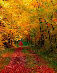 """djferreira224: """"Autumn Drive """""""
