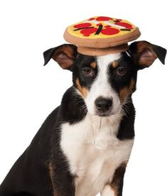 Rubies Costume Company Pizza Hat for Pets. why is this so funny