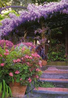 Lavender-colored Wisteria on a wooden Pergola. I absolutely adore hanging Wisteria Love Flowers, Beautiful Flowers, Potted Flowers, Purple Flowers, Garden Cottage, Garden Living, My Secret Garden, Garden Gates, Dream Garden