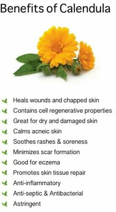 Benefits of Calendula. Also known as Marigold . - Benefits of Calendula. Also known as Marigold - Healing Herbs, Medicinal Plants, Natural Healing, Herbal Plants, Natural Health Remedies, Herbal Remedies, Natural Remedies, Natural Medicine, Herbal Medicine