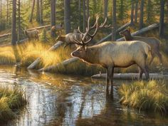 size: Stretched Canvas Print: Bully Bully by Greg Alexander : Artists Using advanced technology, we print the image directly onto canvas, stretch it onto support bars, and finish it with hand-painted edges and a protective coating. Wildlife Paintings, Wildlife Art, Bambi, Bull Elk, Painting Edges, Stretched Canvas Prints, The Great Outdoors, Find Art, Giclee Print