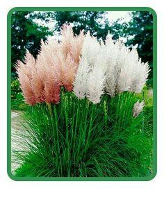 Oriental grasses are beautiful!