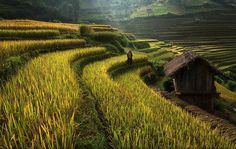 Terraced Vietnam  It is no wonder Sarawut Intarob has nearly two-million views on his 500px page, just look at these images! He has taken pictures in New Zealand, Thailand, Nepal and Tibet, but these paddy fields in Vietnam are really a thing of beauty. The contrast of the smokey-blue-sky with the layered golf-course-looking-vegetation on mountainsides are relaxing and scenic views for any tourist, but for farmers, it is actually a lot of work to create the terraces and maintain the land.