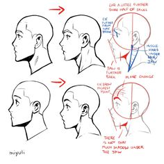Face Profile Drawing, Body Reference Drawing, Guy Drawing, Art Reference Poses, Anatomy Reference, How To Draw Profile, Figure Drawing, Male Face Drawing, Drawing Lessons