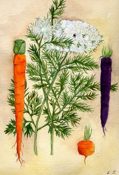 Carrots in pots, a few tips for an abundant harvest - Grow the Planet