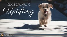 Happy Classical Music - Uplifting, Inspiring & Motivational Classical Music Natural Frequency, Music Store, Types Of Music, Lifestyle News, Playlists, Classical Music, Rugby, My Music, Motivational