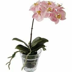 """Faux phalaenopsis orchid in a clear glass pot.    Product: Faux floral arrangementConstruction Material: Polyester, plastic and glassColor: PinkFeatures: Includes faux orchidDimensions: 14"""" H x 10"""" W x 12"""" D"""