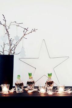 Leuk en uniek. We vervangen de dennentakken gewoon door bloembollen, waarom niet! #ChampagneChristmas